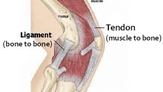 Strengthen Ligaments/Tendons for BJJ